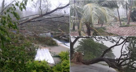 #CycloneTitli Several trees were uprooted in Srikakulam district